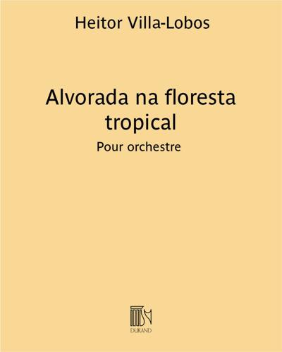 Alvorada na floresta tropical